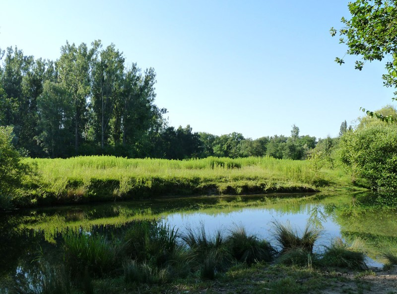 Sortie : Festivités du 14 juillet / Randonnée dans la forêt de la Robertsau